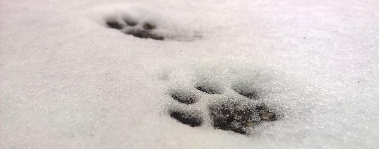 track snow2